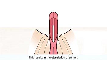 Худые шлюхи в подборке подставляют вульвы и попы для долбежки с крупными пенисами